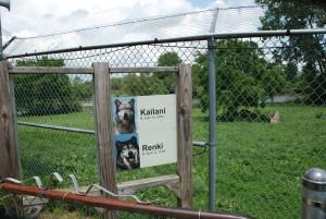 Wolf Park, West Lafayette, Indiana